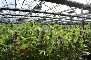 grow house 2